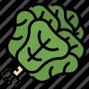 butterhead, healthy, lettuce, vegetable icon