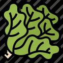 escarole, healthy, lettuce, vegetable icon