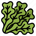 oak, lettuce, healthy, vegetable, green, green oak