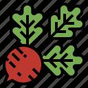 food, radishes, root, vegetable