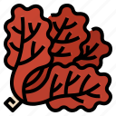 coral, healthy, lettuce, red, red coral, vegetable icon