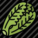 healthy, lettuce, romaine, vegetable