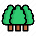 forest, tree, trees, ecology, environment, plant, green