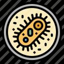 bacteria, cell, healthcare, scientist, virus icon
