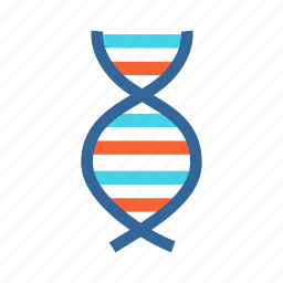 biology, dna, dna structure, gene, genetic structure icon