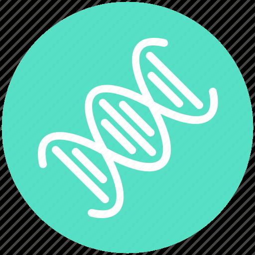 chain, dna, genetics, helix, molecule, science, strand icon