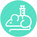 experiment, injection, laboratory, mouse, science, syringe