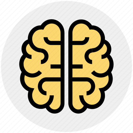 Brain, brainstorming, human brain, intelligence, organ, science icon - Download on Iconfinder