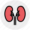 anatomy, biology, body, health, kidney, medical, science icon
