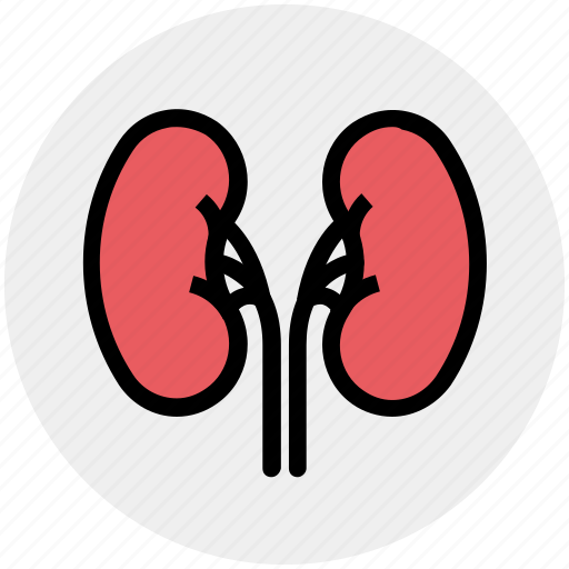 Anatomy, biology, body, health, kidney, medical, science icon - Download on Iconfinder