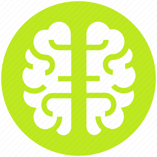 brain, brainstorming, human brain, intelligence, organ, science icon