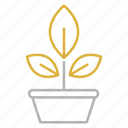 botany, education, plant, science, study icon