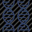 dna, deoxyribonucleic acid, dna strands, double helix, chromosome