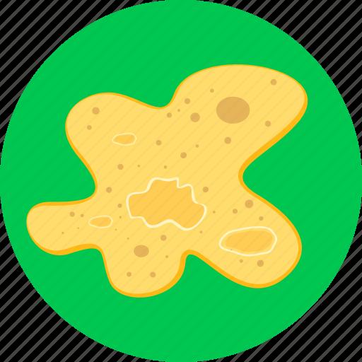 amoeba, bacteria, biology, microbe, microorganism, unicellular icon