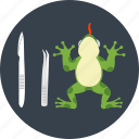 amphibian, animal, animal testing, examination, frog, test, toad icon