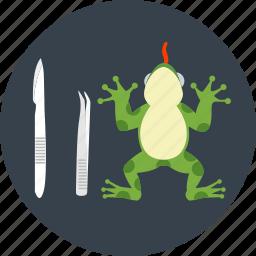 amphibian, animal, animal testing, examination, frog, test, toad icon
