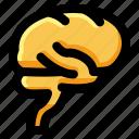 brain, head, human, idea, knowledge, mind, organ