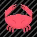 animals, aquarium, crab, food, seafood, sealife, summer