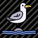 animal, bird, fly, nature, sea, seagull
