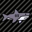 animal, fish, life, sea, shark, wild