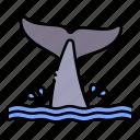animal, aquatic, nature, sea, sealife, tail, whale