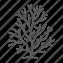 coral, reef, sea, ocean, animal, wildlife, plant
