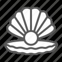 seashell, pearl, shell, ocean, animal, open, luxury