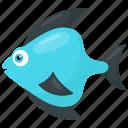 fish, flat body fish, reef fish, teardrop fish, tropical animal