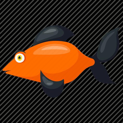 Aquarium fish, black smudge goldfish, freshwater fish, goldfish, pet fish icon - Download on Iconfinder