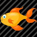 aquarium fish, fancy goldfish, freshwater fish, oranda, ryukin goldfish icon