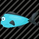 dorado fish, fish, ray-finned fish, sub tropical fish, tropical fish icon