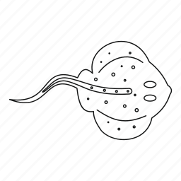 fish, line, outline, predator, sea, stingray, thin icon