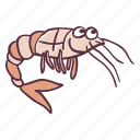 animal, ocean, sea, shrimp, water icon