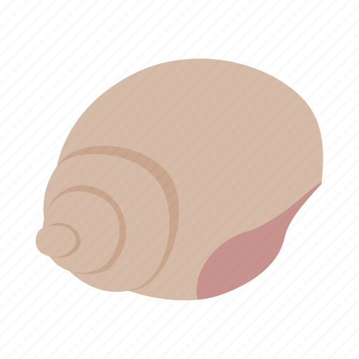 beach, element, isometric, ocean, sea, shell, summer icon