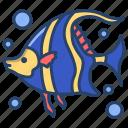 angel, fish