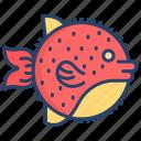 puffer, fish