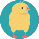 animal, cartoon chick, chick, domestic animal, young bird icon