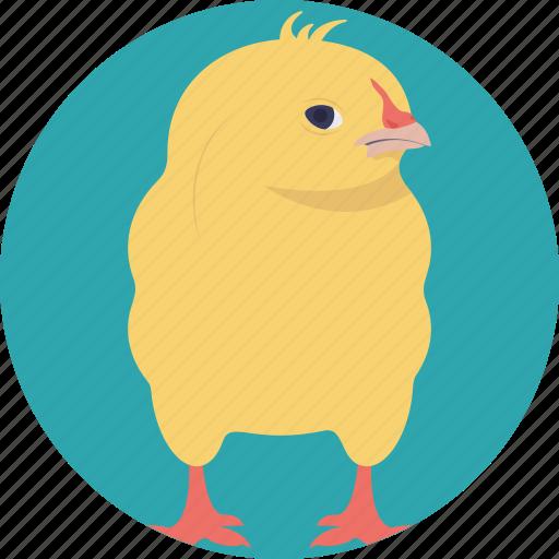 animal, cartoon chick, chick, domestic animal, young bird icon