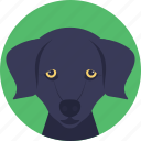 animal, dog, dog face, domestic dog, foxhound icon
