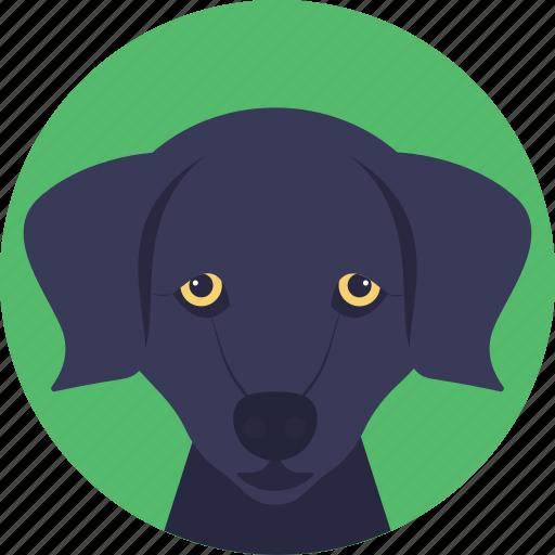 animal, dog, dog face, domestic dog, foxhound icon