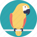 animal, bird, cage bird, cartoon parrot, cute, parrot icon