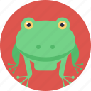 animal, cartoon frog, frog, land animal, toad icon