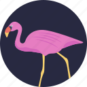 animal, bird, crane bird, flamingo, gruidae icon