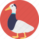 animal, domestic animal, duck, geese, swan icon