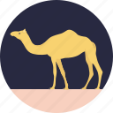 animal, camel, desert animal, domestic animal, mammal icon