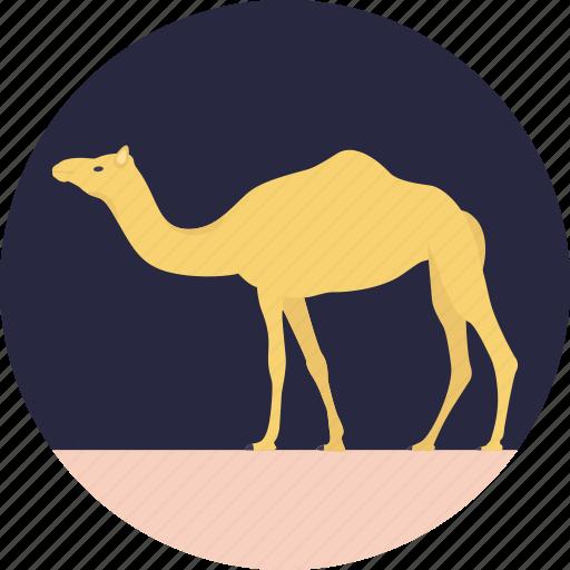 animal, camel, desert animal, domestic animal, mammal icon