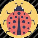 coccinellidae, lady beetles, ladybird, ladybird beetles, ladybug icon