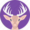 christmas deer, reindeer, wild animal, wildlife, xmas icon