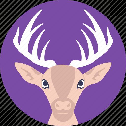 christmas deer, reindeer, wild animal, wildlife, xmas icon