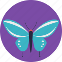 blue butterfly, butterfly, garden, insect, nature icon